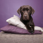 How to keep your pets warm during winter