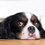 Top 15 human foods your dog can eat