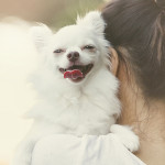 5 habits of an incredibly happy dog