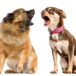 5 reasons why your dog barks too much