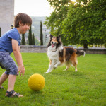 3 fun games your dog will love