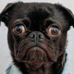 Are Dog Probiotics a waste of money?