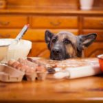 The Ultimate Healthy Pet Food – Why use 'Dig-In' Fresh?