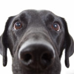 5 Common dog behaviours explained