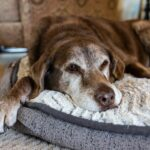 How can you fight Dog Joint Pain?